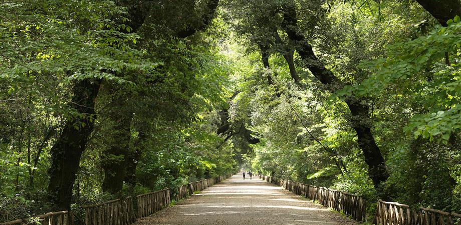 Viale principale del Bosco di Capodimonte a Napoli