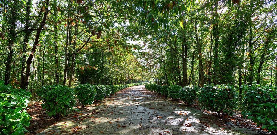 Viale del Parco dei Camaldoli a Napoli
