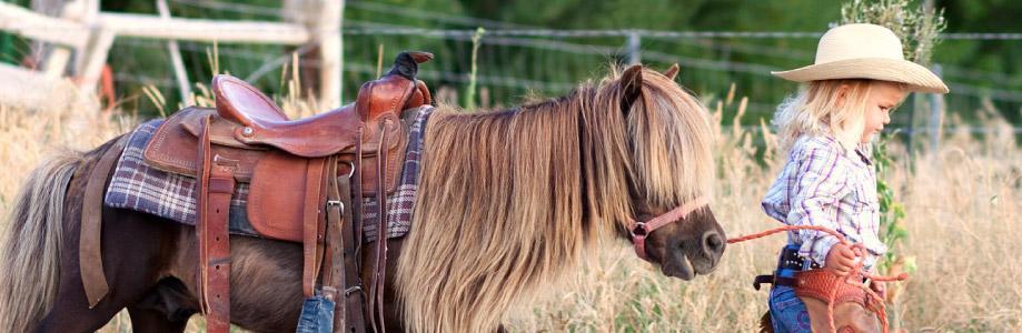 celp-pony