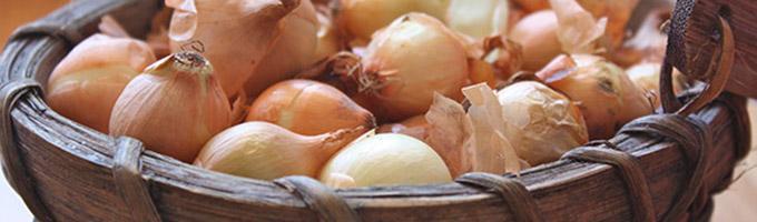 cipolle-sagra
