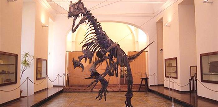 fossile di tirannosauro al museo di paleontologia di napoli