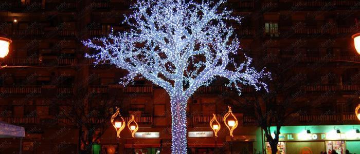 Starry-sky-and-Walnut-Tree