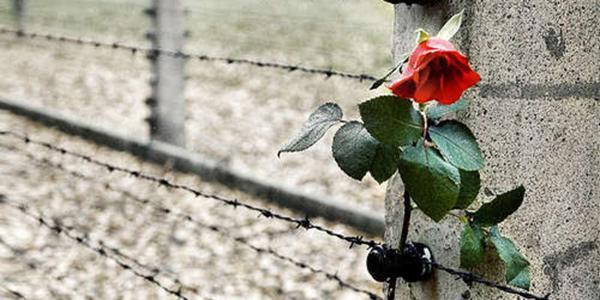 fiore poso all'esterno di un campo di concentramento nazista per la giornata della memoria