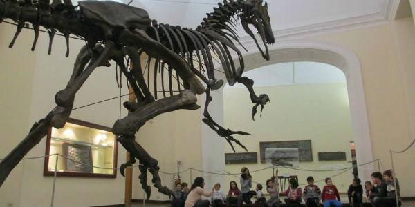 Foto del Museo di Paleontologia di Napoli, festa di Carnevale 2014
