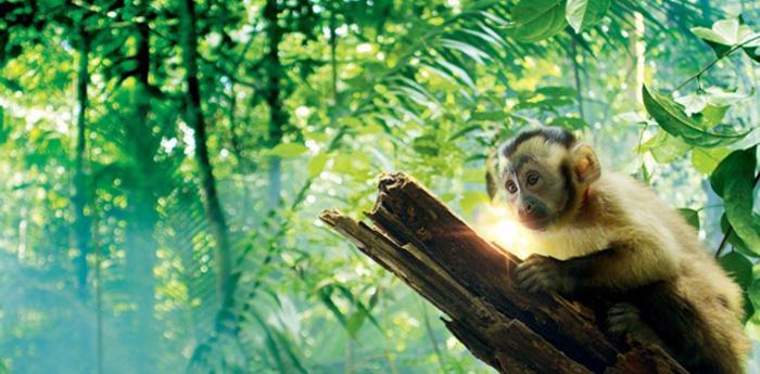 locandina del documentario Amazzonia 3D