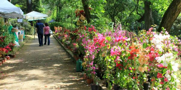 Piante in esposizione all'Orto Botanico di Napoli