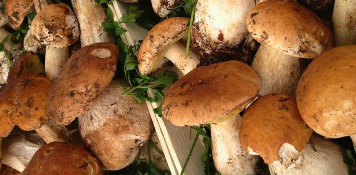 Sagra dei Funghi Cusano Mutri