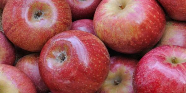 le mele annurche