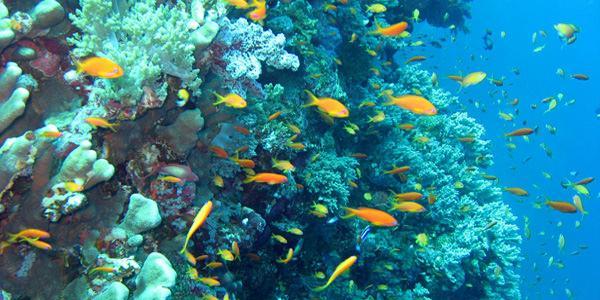profondità marine