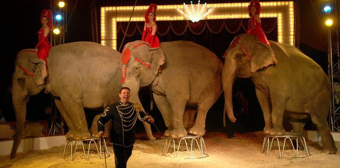 esibizione di elefanti all'american circus togni