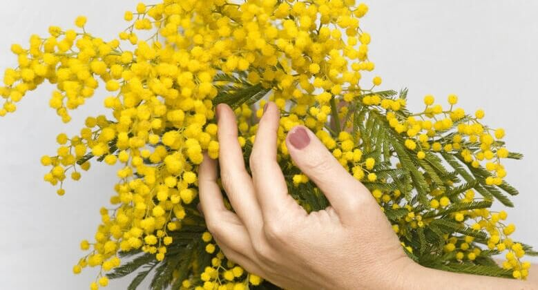 mimosa-in-hands