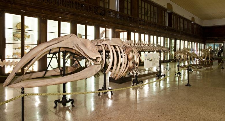 museo scienze naturali napoli