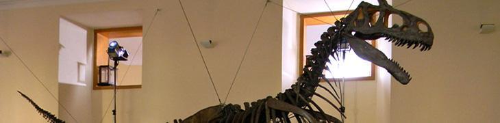 Scheletro di dinosauro al Museo di Paleontologia di Napoli