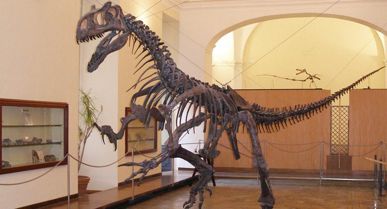 Sala espositiva del Centro Musei delle Scienze Naturali e Fisiche a Napoli