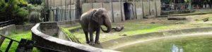 Primo Maggio 2019 allo Zoo di Napoli: tra eventi e divertimento