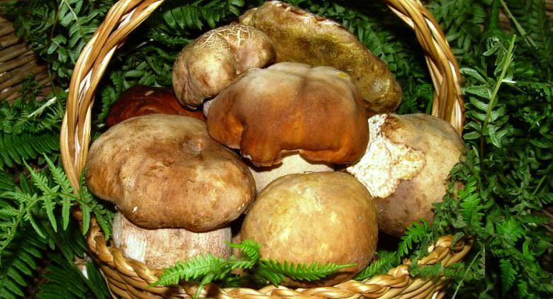 Festa del Fungo Porcino e Sapori del Borgo 2015 a Montoro (AV)