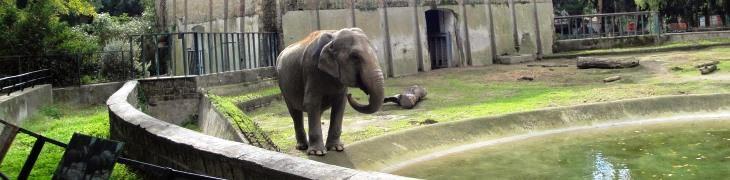 Natale 2018 allo Zoo di Napoli: Zoo experience ed eventi speciali