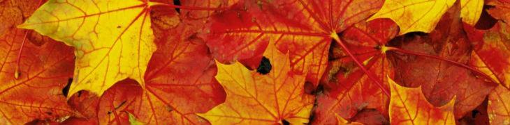 autunno-all-ippodromo-di-agnano