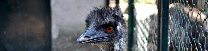 Zoo di Napoli, ingresso gratuito per i bambini a luglio