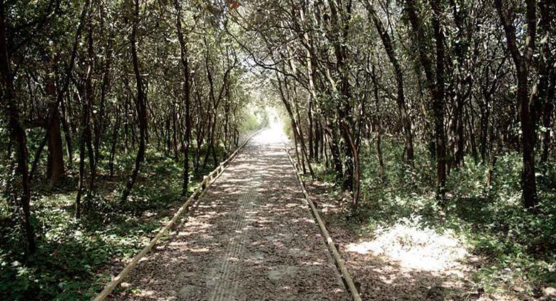 Passeggiata nella Foresta di Cuma