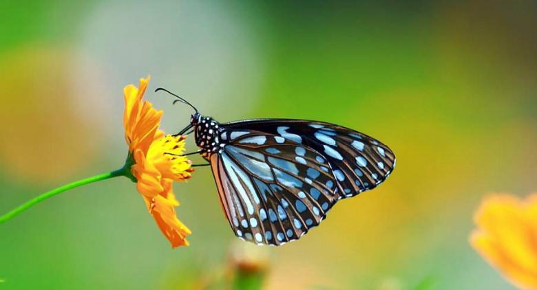 mostra universo delle farfalle orto botanico