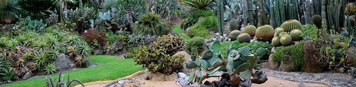 bimbi-in-planta