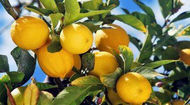 Lemon Night 2016