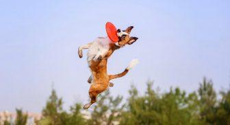 Tonus Dog Tour alla Mostra d'Oltremare di Napoli