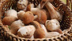 Sagra dei funghi 2016 a Cusano Mutri con artigianato ed escursioni