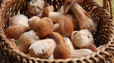 Sagra dei funghi 2016 a Cusano Mutri