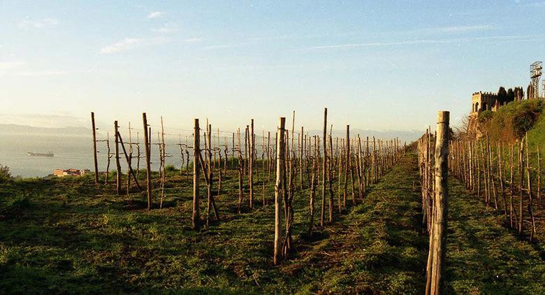 Festival delle Vigne Metropolitane a Napoli