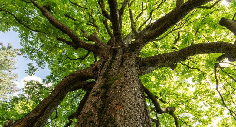 ffesta dell'albero orto botanico napoli