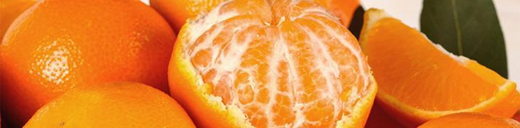 Festa del mandarino ai Campi Flegrei