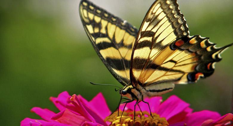 Mostra Universo delle Farfalle a Napoli all'Orto Botanico