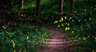 A Bacoli tornano le passeggiate tra le lucciole