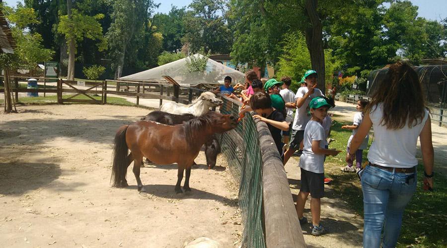 Bambini allo Zoo di Napoli, campi estivi