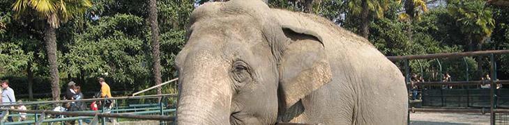 Zoo di Napoli: bambini ingresso gratuito