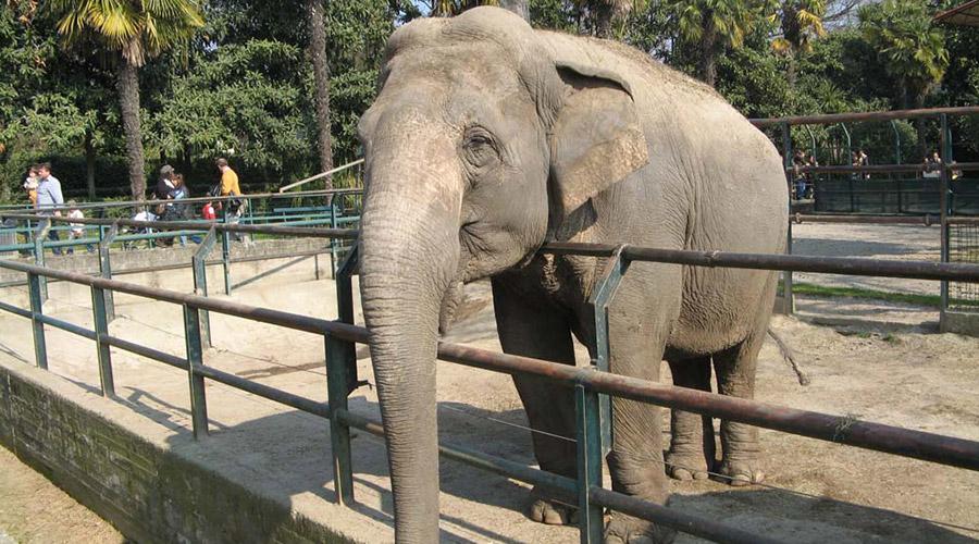 Zoo di Napoli, ingresso gratis per bambini