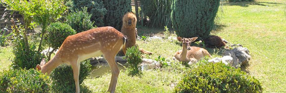 Секретный сад аиролы