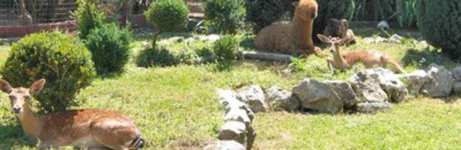 Alcune degli animali che si potranno osservare nel giardino segreto di Airola