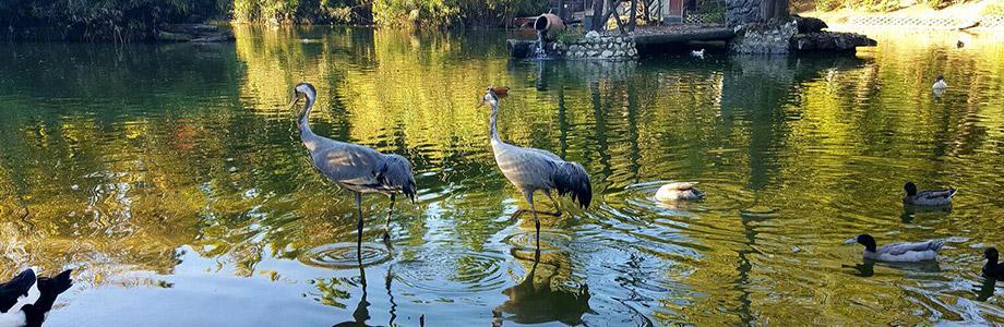 Неаполитанский зоопарк