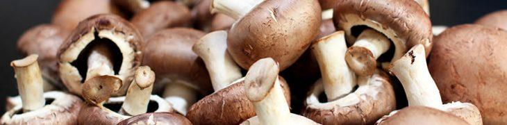 Sagra dei funghi a Cusano Mutri
