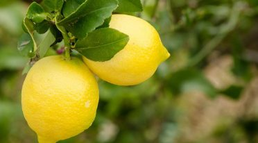 Lemon Night a Maiori