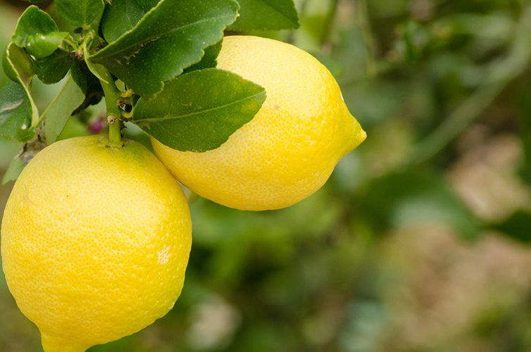 Lemon Night a Maiori