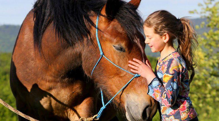 Journée du cheval à l'école d'équitation CELP