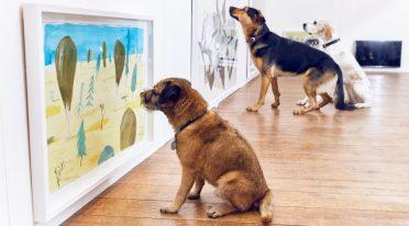 Animali al museo