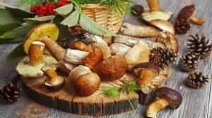 Mushroom Festival und Grand Festival von Tammorra in San Giuseppe Vesuviano