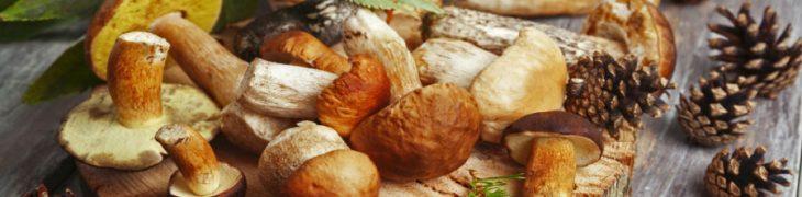 Sagra dei Funghi e Grande Festa della Tammorra a San Giuseppe Vesuviano
