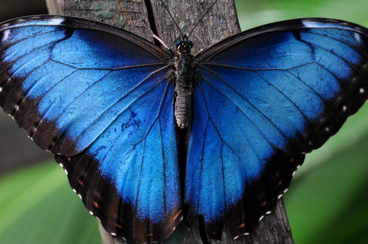 Butterfly House allo zoo di Napoli