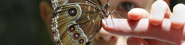 Bambino e farfalla, Darwin Week a Città della Scienza